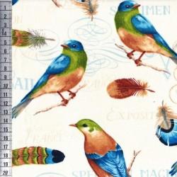 Birds & Feathers - Birds